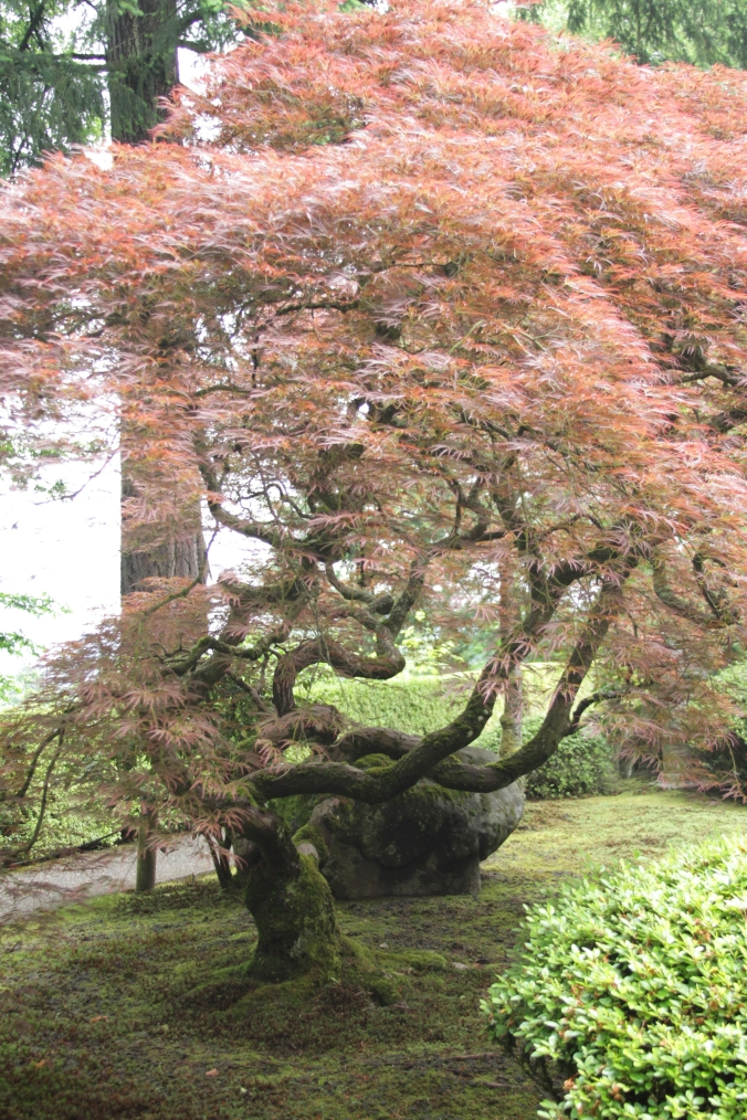 2015 May Japanese Garden Portland (2)